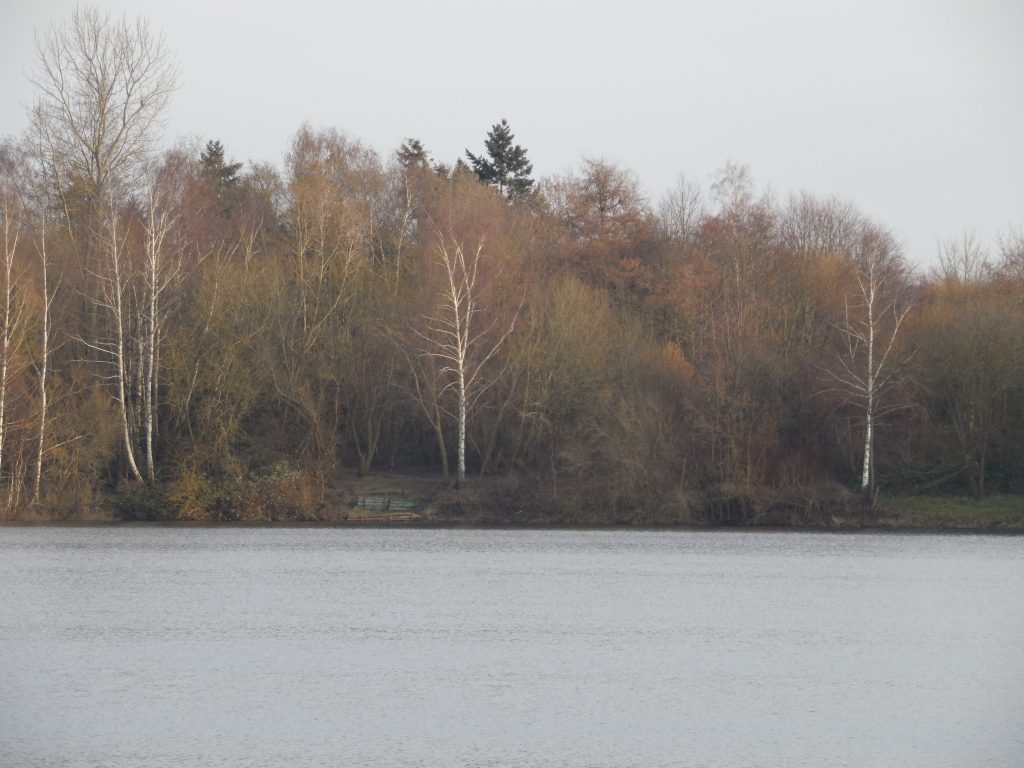 Broichsee im Winter